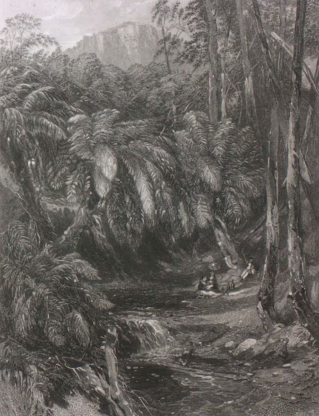 A Fern-Tree Valley