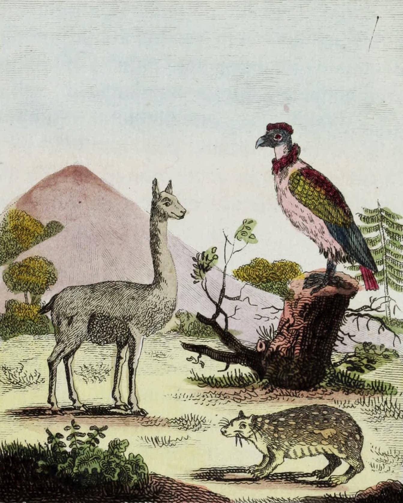 La Vigogne, le Paca, le Condor