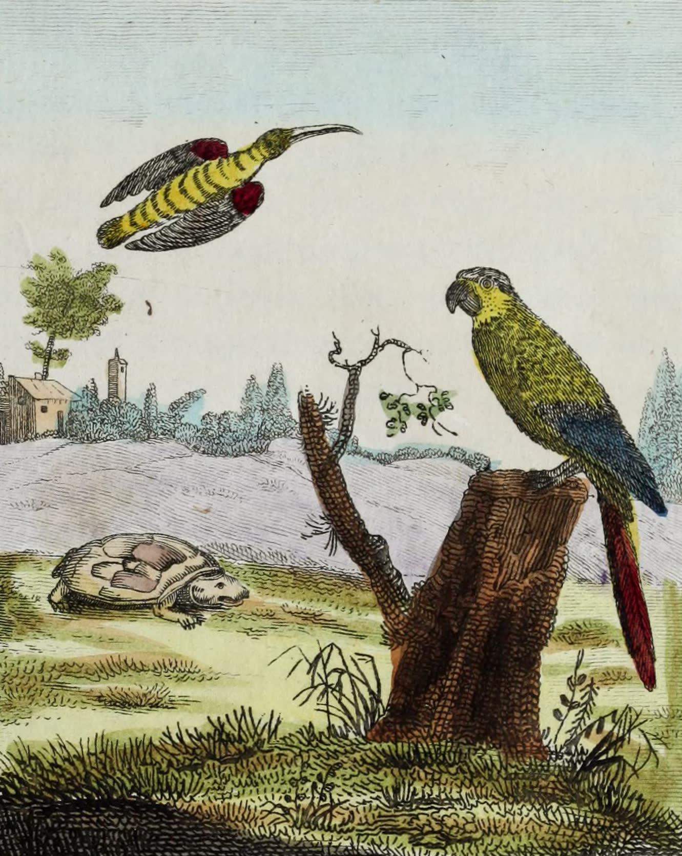 Le Colibri, la Tortue terrestre, l'Ara